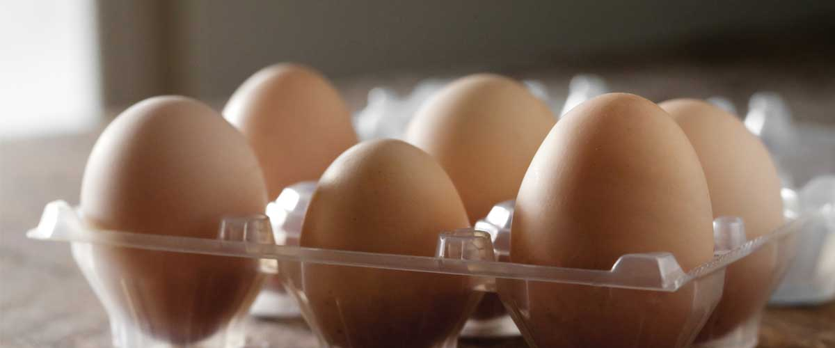 Starwood Hotels & Resorts Worldwide Commits to Cage-Free Eggs